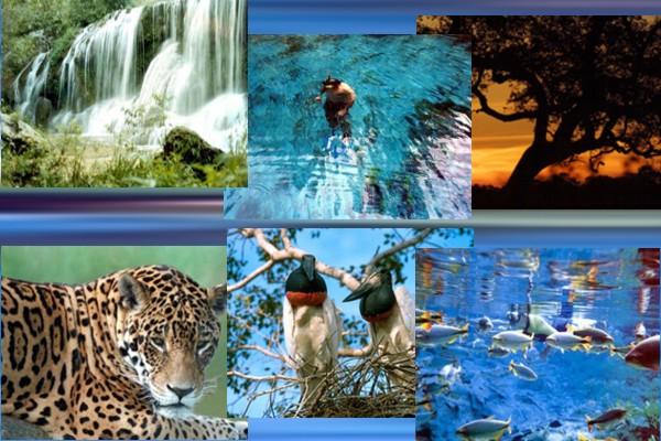 Bonito, o melhor destino de turismo ecológico do Brasil