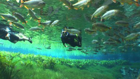 Conheça a beleza dos peixes em Bonito e ajude a preservar a natureza