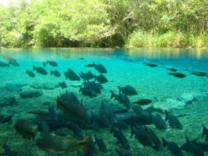 Flutuação No Rio Da Prata bonito ms