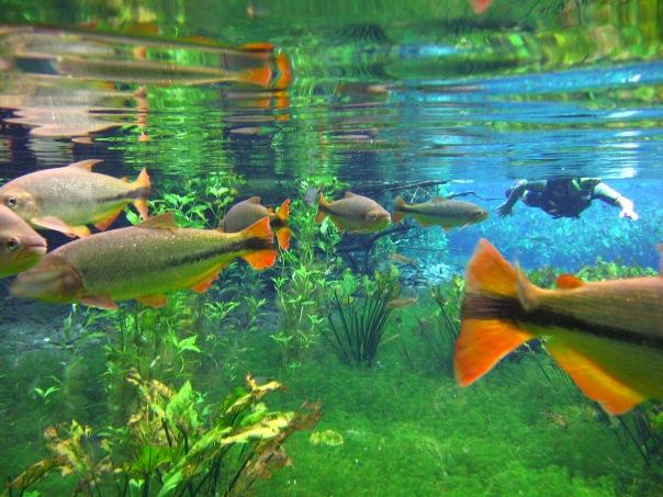 Aquario Natural bonito ms