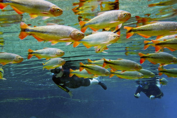 Rio da Prata-Snorkeling-Daniel De Granville